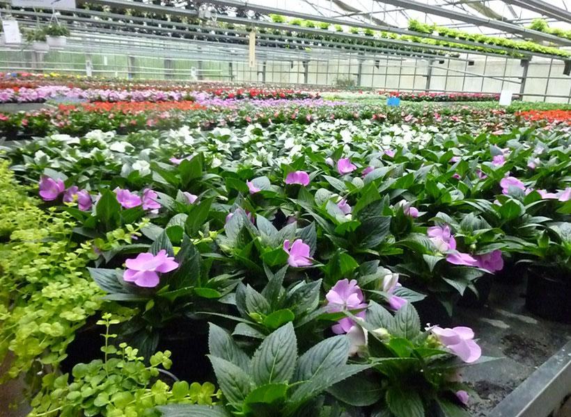 Blumen Beinert Gewächshaus